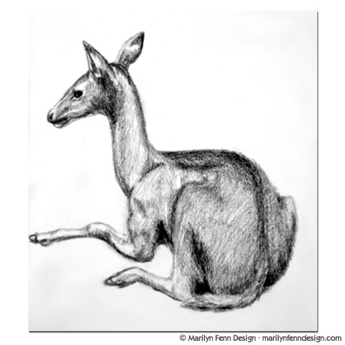 Sketch of a Deer at the Field Museum